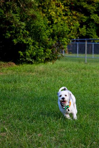 Sooki at Dog Park