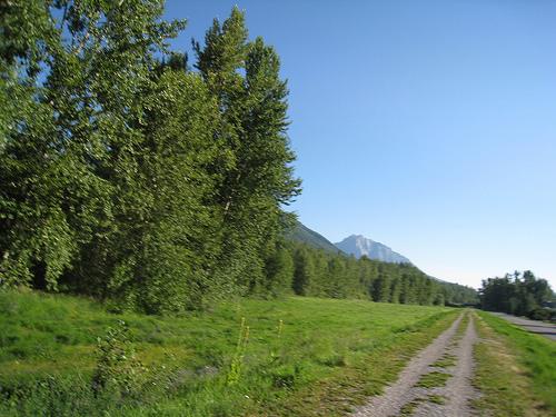 Running trail in Fernie BC